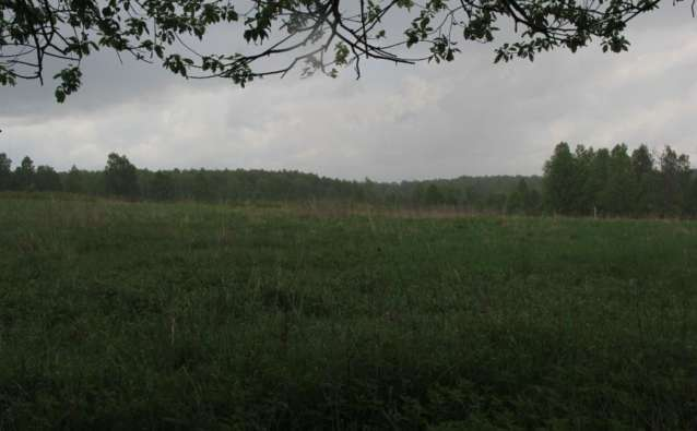 Урочище Быково встретило нас дождём. Вид с высотки на северо-восточную окраину бывшей деревни.